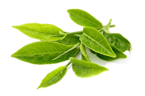 bigstock-Green-tea-leaf-isolated-on-whi-42919201